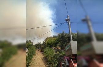 Marmara Adası ve Burgazada'da orman yangını