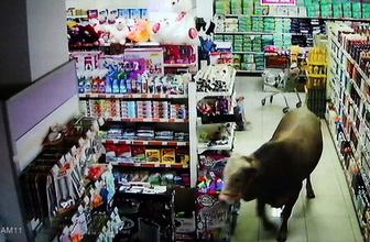 Adıyaman'da kaçan kurbanlık dana markete girdi