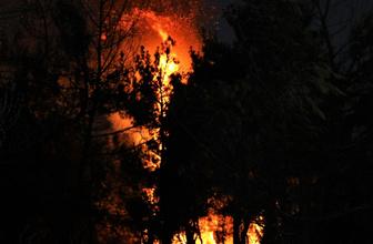 Eskişehir Seyitgazi ilçesinde orman yangını