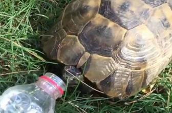 Sıcaktan bunalan kaplumbağaya pet şişeden su içirdi