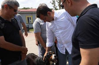İmamoğlu'ndan sokak hayvanları talimatı