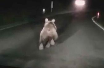 Bartın'da otomobilin önüne ayı çıktı