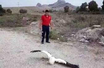 Adana'da leylekleri elektrik çarptı