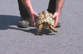 Kaplumbağayı kurtarmak isterken canından oldu