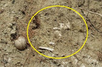 Balıkesir'de yol kenarında çok sayıda kemik ortaya çıktı