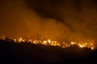 Orman yangınları 9 bin kişiyi yerinden etti 'Benzeri görülmemiş bir çevre trajedisi'