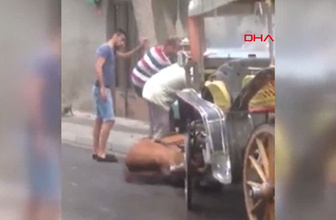 Büyükada'da faytona sürülen at yere yığıldı tepki çeken görüntü