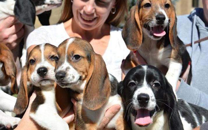 Dünyanın ilk tüp köpek yavruları tanıtıldı