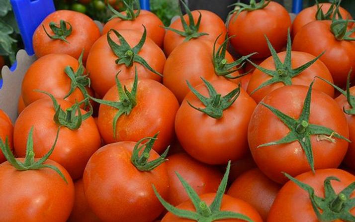 Rusya Türkiye'den ne zaman domates alacağını açıkladı