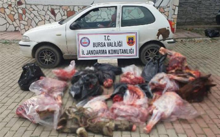Bursa'da skandal: 306 kilo at eti ele geçirildi!