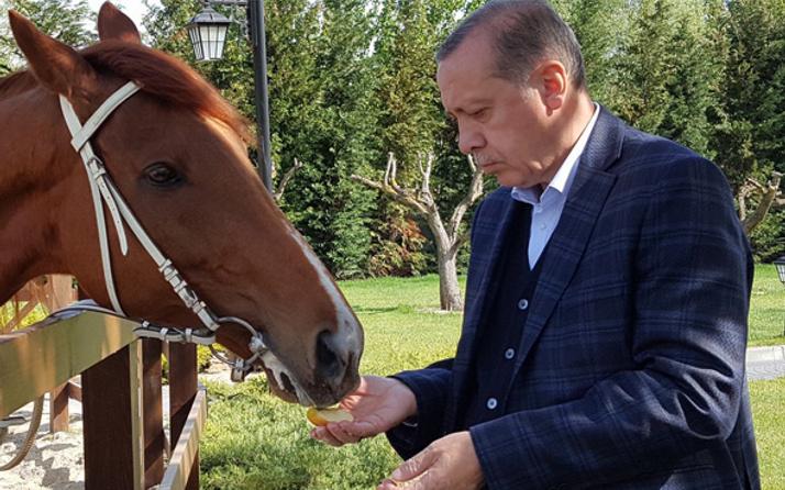 Erdoğan at bindi! Mustafa Varank paylaştı