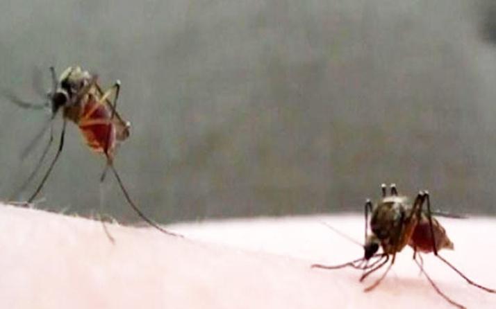 Çinli bilim insanları, sivrisineklere karşı çözümü buldu!