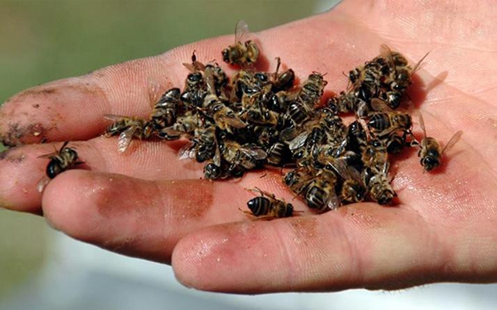 Kilis'te arının soktuğu yaşlı kadın öldü
