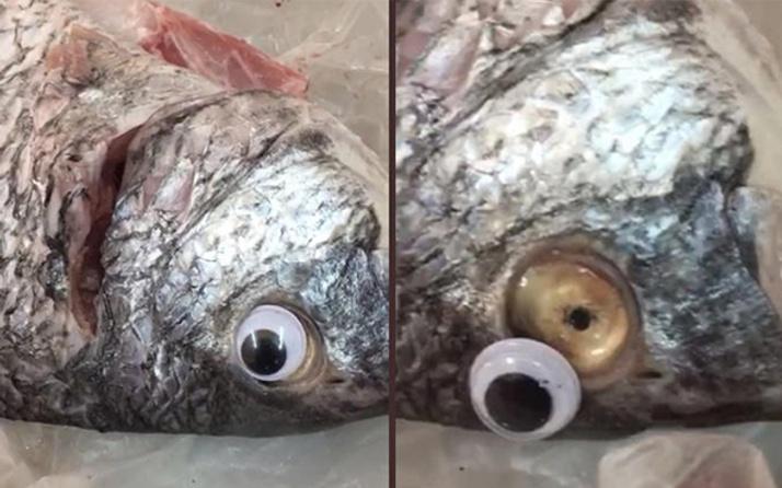Sosyal medyada olay yarattı: Balıkçının oyunu 'pes' dedirtti!