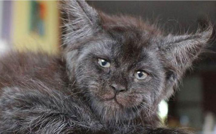 Evde tek başına olan bir kedi yangın çıkardı!