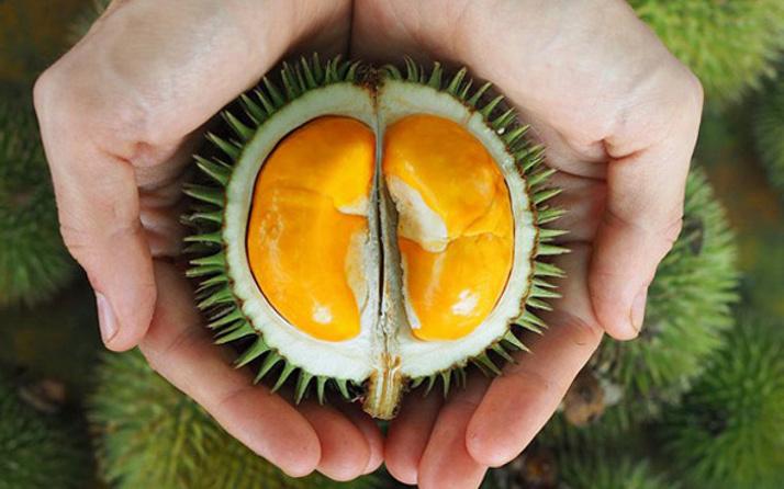 Durian meyvesi nedir?