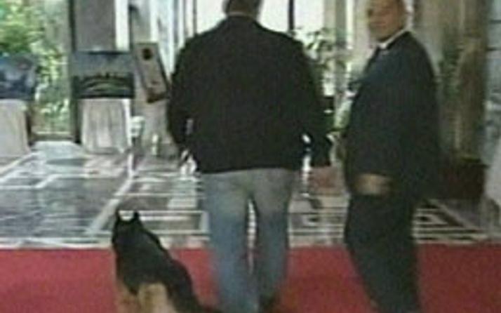 Bu köpekler Meclis'te ne arıyor?