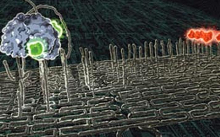 DNA robotları geliştirildi
