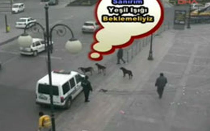 3 sokak köpeğinden trafik dersi
