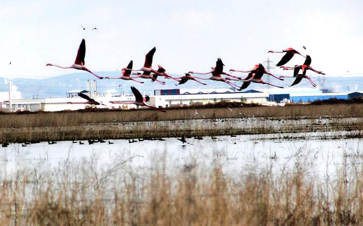Flamingolar Kayseri'de bu yıl da eşsiz manzaralara sahne oldu