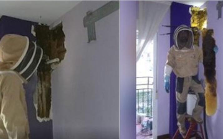İspanyol çift uğultudan rahatsızdı! Yatak odasının duvarından çıkana bakın