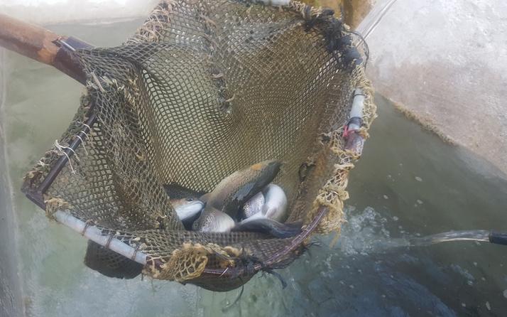 Uludağ'da bu çiftlikte kendi balığını kendin tutuyorsun