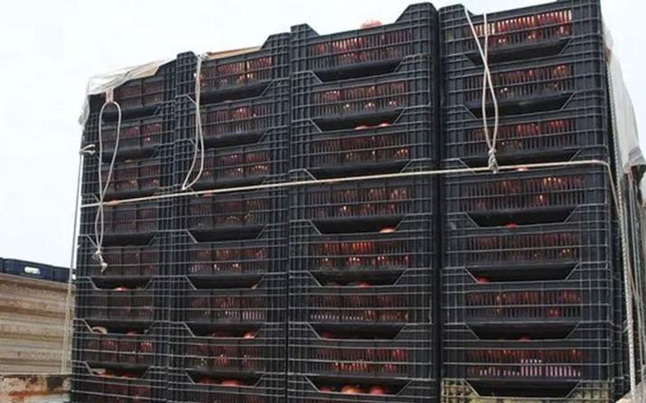 Halde domates 1 liraya kadar düştü