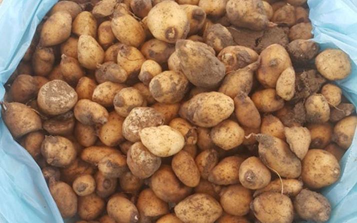 Van Gölü kıyısında salep soğanı topluyordu! 60 bin TL ceza yedi