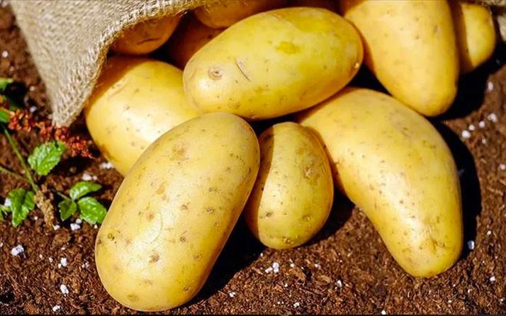 Ticaret Bakanlığı'ndan patates ithalatına gözetim kararı