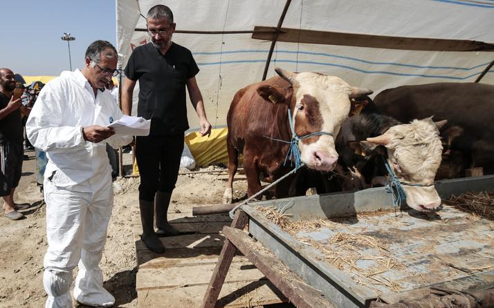 Sağlık Bakanlığı'ndan bayram öncesi 'zoonotik hastalık' uyarısı