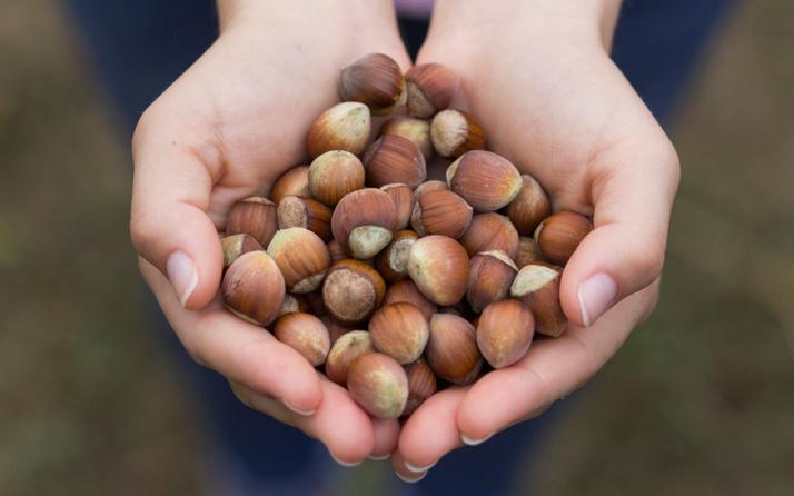 Ferrero: Türkiye 2 milyon ton fındık üretebilecek kapasitede