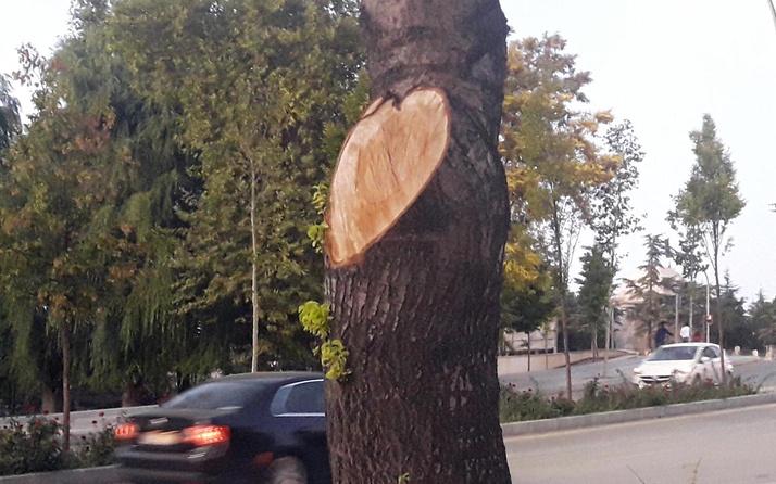 Kırşehir'de iş yerinin önündeki 2 ağacı kesen esnafa 50 bin TL para cezası