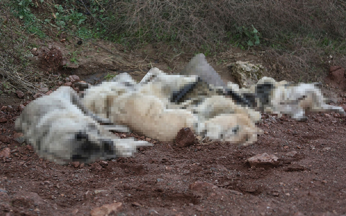 Osmaniye'de arazide çok sayıda ölü köpek bulundu