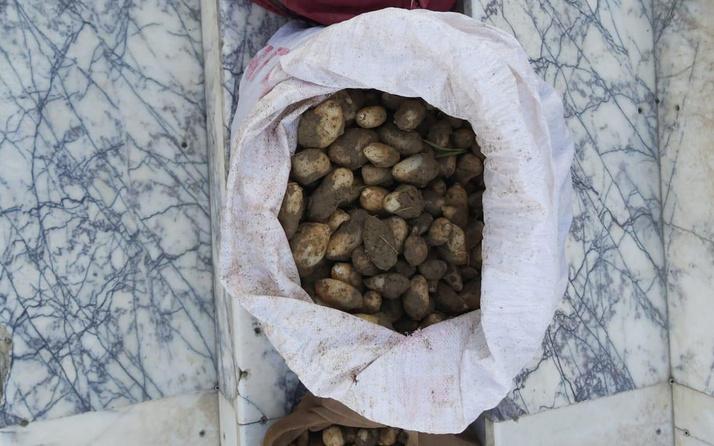 Elazığ'da salep bitkisi toplayan 4 kişiye rekor ceza!