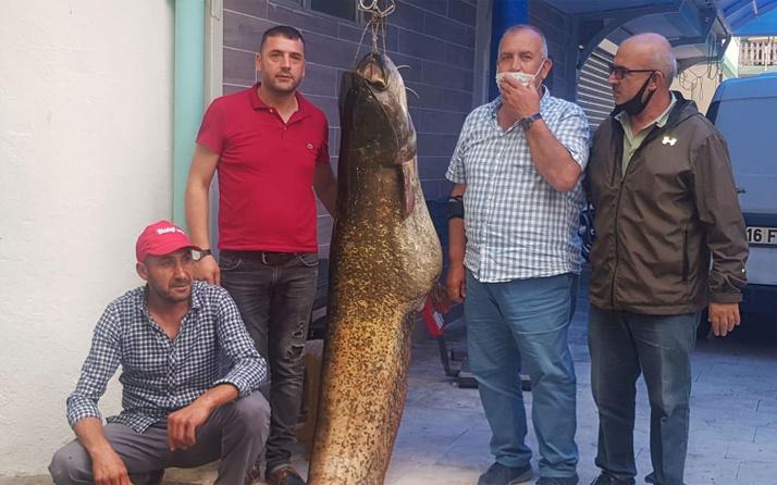 İznik Gölü'nde yakalandı dev yayın balığını 10 kişi çekti