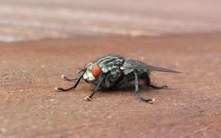 Fransa'da bir adam sinek öldürmek isterken evini havaya uçurdu