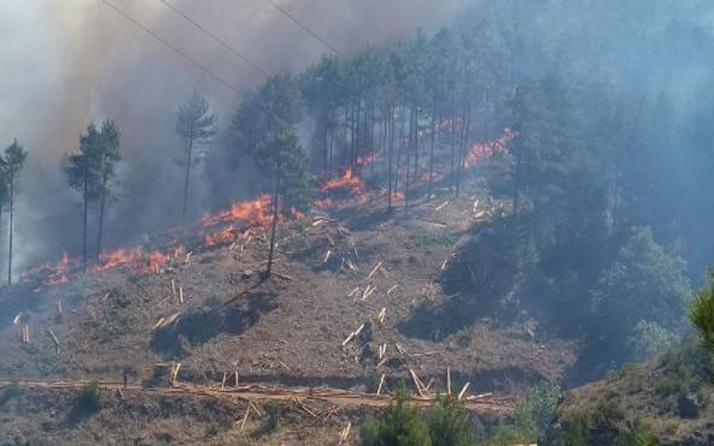 Adana, Antalya ve Mersin'de orman yangını! Bakan Bekir Pakdemirli'den açıklama geldi