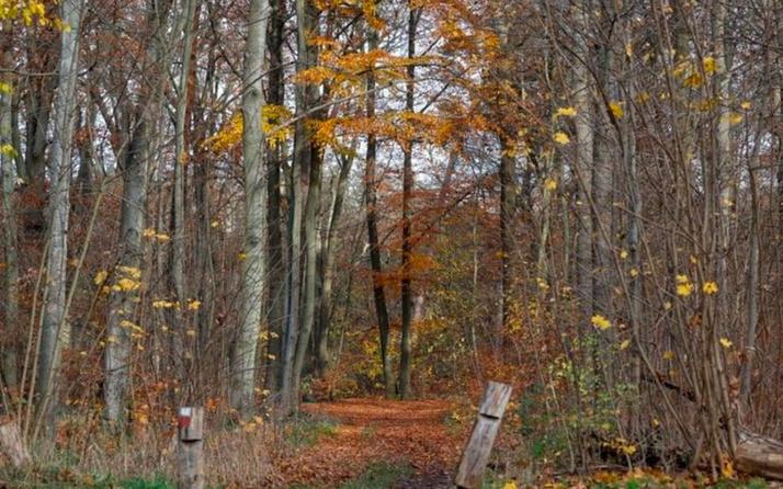 Almanya'da ormanda insan kemikleri bulundu bir kişi yamyamlık şüphesiyle gözaltına alındı