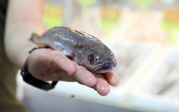 Denizi olmayan Kahramanmaraş'tan 54 ülkeye balık ihracatı
