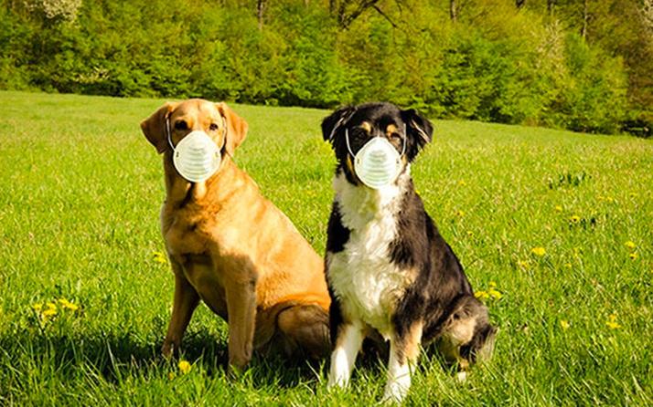 Rusya'dan hayvanlar için Covid-19 aşısı