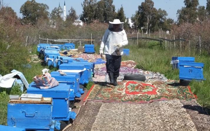 Balıkesir'de arı kovanlarının önüne halı serdi! Sebebini duyan şaştı kaldı