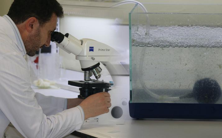 Marmara'nın müsilajında mikroskopta bakın ne çıktı