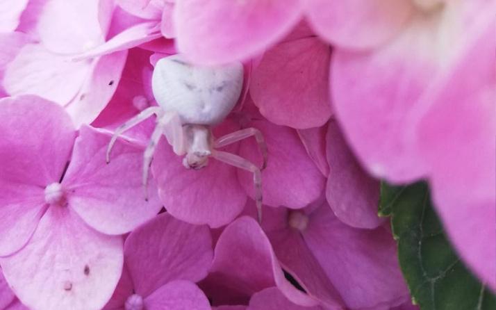 'İnsan yüzlü örümcek' İzmir'de ortaya çıktı: İlk kez gördüm ve çok şaşırdım
