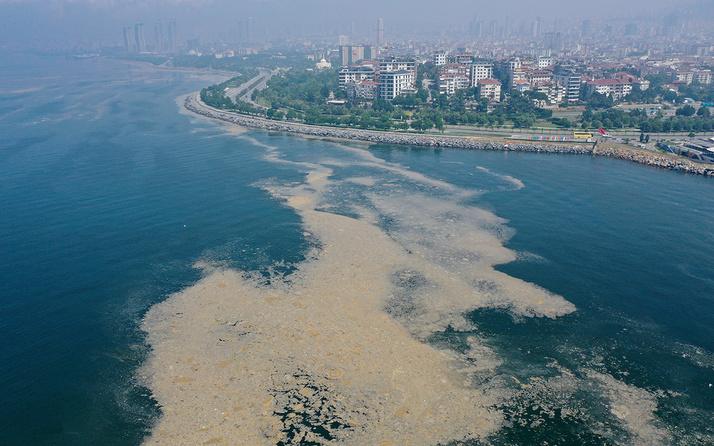 Marmara denizindeki müsilaja karşı uzmanlardan midye çağrısı