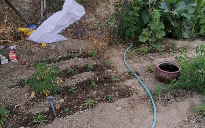 Manisa'da evinin bahçesinde kenevir yetiştiren yaşlı kadın gözaltına alındı