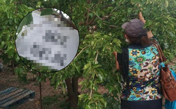 Eskişehir'de ağaçtaki yazı görenleri şaşırttı! Yürekleri ısıtan görüntü