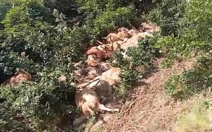 Tunceli Ovacık'ta 80 koyun telef oldu