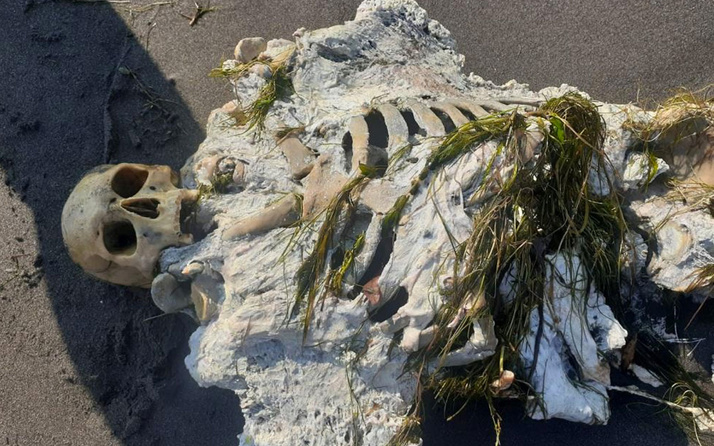 Samsun'da sahile vurdu yürüyüş yapanlar gözlerine inanamadı