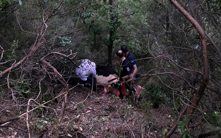 Kocaeli'de sahibinin elinden kaçarak uçuruma yuvarlanan büyükbaş hayvan düştüğü alanda kesildi