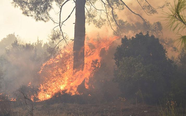 Antalya'nın Kemer ilçesinde 3 alanda başlayan orman yangını söndürüldü